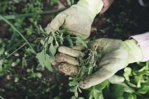 Impact of Gardening on Mental Health